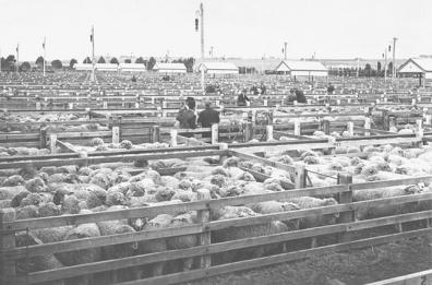 sheep-markets