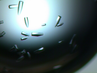 alpha-galacotsidase-crystals