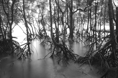 mangroves-of-the-sundarban