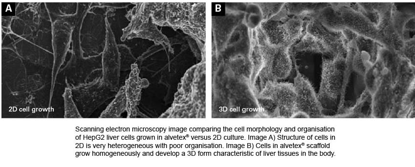 2D cell growth